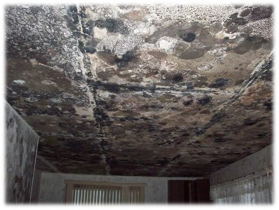Serious Mold Problem